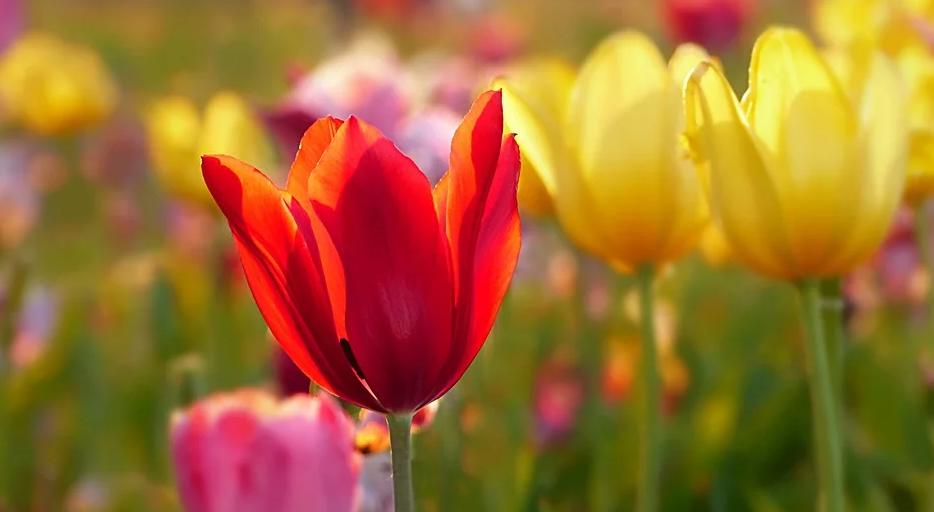 Schicke Einrichtung des Hotels durch Blumen